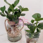 Plantjes op water i.p.v. in de aarde